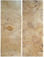 Newly arrived Maple Burl wood